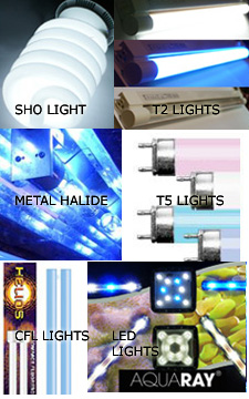 Aquarium Light Typs, Metal Halide, LED, CFL, T2, T5, SHO