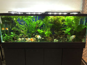 100 Gallon Planted Aquarium with GroBeam and Marine White 600 LED Strips
