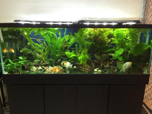 diy 75 gallon fish tank stand plans - jarod202
