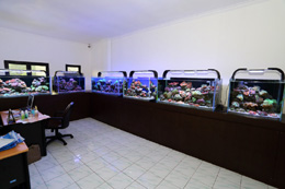 TMC AquaRay LED utilized Indo Reef Club Office reef aquariums