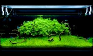green light coloration planted aquarium