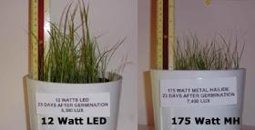 Metal Halide versus LED light growth experiment