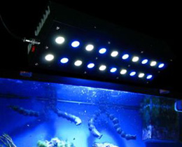 EShine older Generation LED knock off aquarium light
