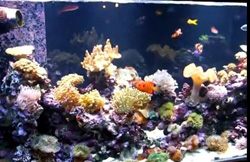 TMC AquaBeam Ultra 1000 Reef White over marine aquarium