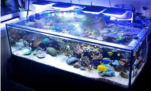 AquaBeam 2000 Reef White, 1500 NP Ocean Blue 1500 Aquarium LED Lighting