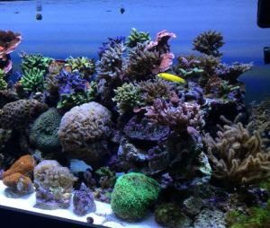 build my led aquarium article digest