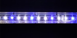 Ecoxotic Panorama Strip, Module 8000K/453nm Actinic Blue