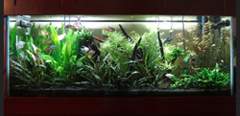 75 Gallon Planted Aquarium with GroBeam, LED Reviews