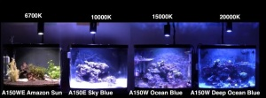 Kessil LED Review