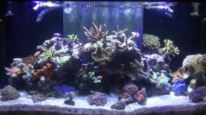 Marineland Reef LED Review