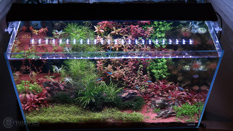 Planted + 24 7 LED Review