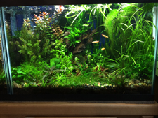 20 Gallon Planted Aquarium with one GroBeam LED and one T2 Light