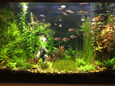 20 Gallon Planted Aquarium with one GroBeam LED Light