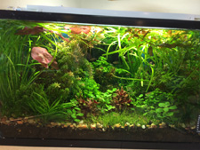 Planted 10 gallon Aquarium with T2 6400l lighting, lights