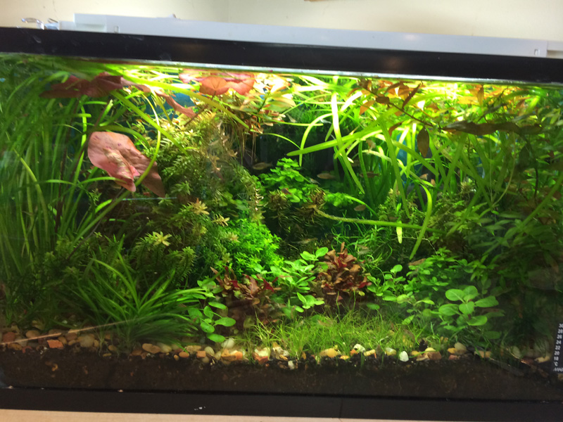 Planted Aquarium Central