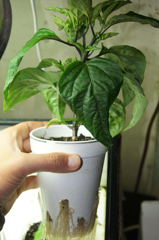 Lumens Lux Requirements Of A Cannabis Plant Aquarium