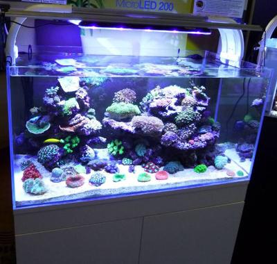 kessil aquarium article digest