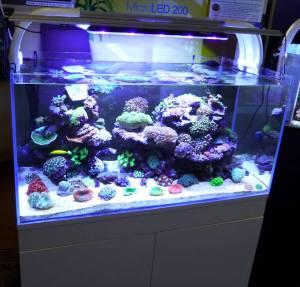 AquaRayNUV2013