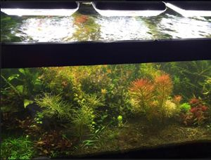 TMC GroBeam and Colour Plus 1500 over high tech planted aquarium