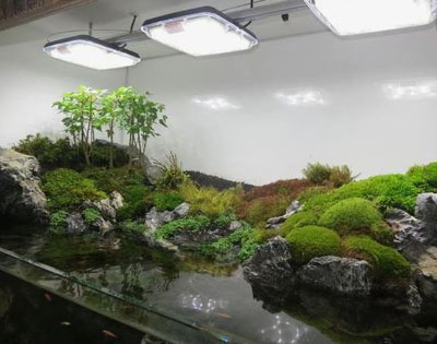 AquaRay Lighting, Aquascape with AquaGro Grobeam 1500 Daylight